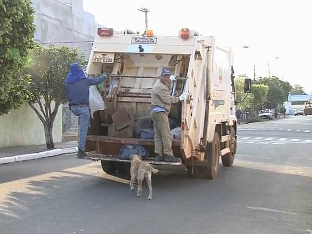 Cadelinha Lua acompanha coletores de lixo em Clementina (Foto: Reprodução/TV TEM)