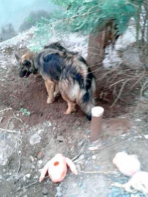 Cão cava buraco e polícia acha 300 pedras de crack (Foto: Edmilson Antunes/Polícia Civil)