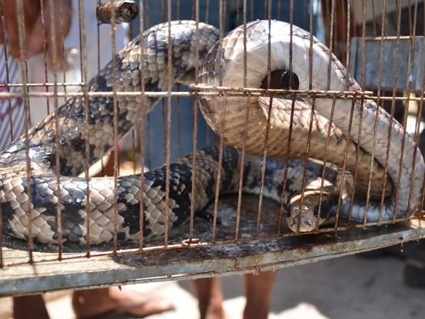 Cobra da espécie Boipeva foi encontrada em Cabedelo, Paraíba (Foto: Walter Paparazzo/G1)