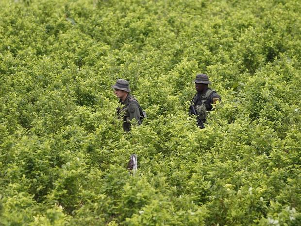 Polícia patrulha um campo de coca como parte de uma campanha de erradicação manual de cultivos ilícitos em San Miguel, na fronteira sul da Colômbia com o Equador. (Foto: Fernando Vergara/AP)