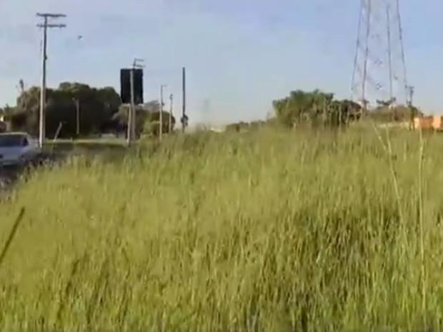 Área na avenida João José Lucania Fernandes, no bairro São Deocleciano, está com mato alto (Foto: Reprodução/TV TEM)