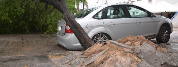 Árvores com raízes artificiais plantadas em locais de pouco espaço contribuem para acidentes (Foto: Walter Paparazzo/G1)
