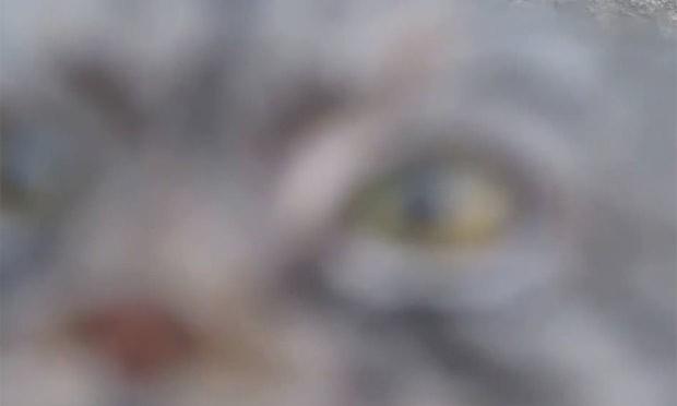 Pequeno gato selvagem originário da Ásia Central parece desconfiado ao ver a câmera (Foto: Reprodução/YouTube/Leevartan424)