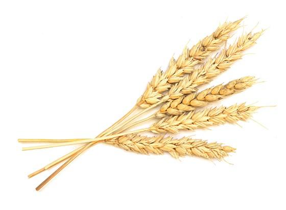 TRIGO O consumidor tem dificuldade em saber a proporção de cereal integral nos produtos (Foto: Thinkstock/Getty Images)