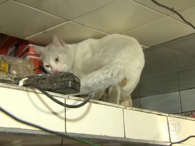 Gato circula pela área da cozinha de pastelaria (Foto: Reprodução/TV Globo)