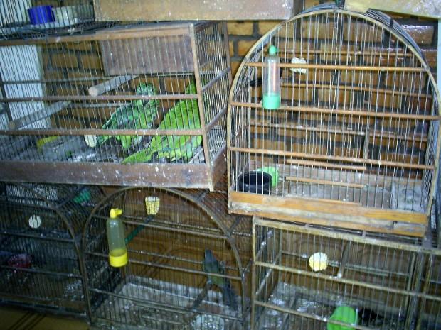 Combate ao tráfico de papagaios será prioridade para a PMA. (Foto: Divulgação/PMA)