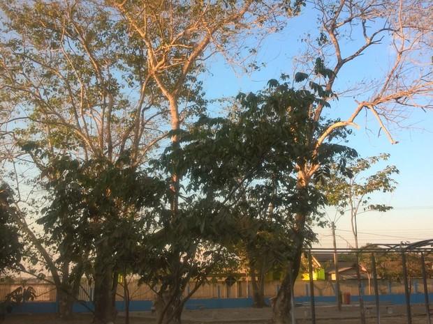 Derrubada de bosque faz parte de projeto de expansão (Foto: Marco Bernardi/ G1)