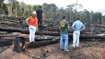 Projeto visa reflorestamento de áreas (Prefeitura de Óbidos/Divulgação)