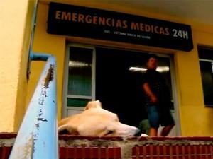 Cão espera há 15 dias por dono em frente a hospital de Passo Fundo, RS (Foto: Reprodução/RBS TV)