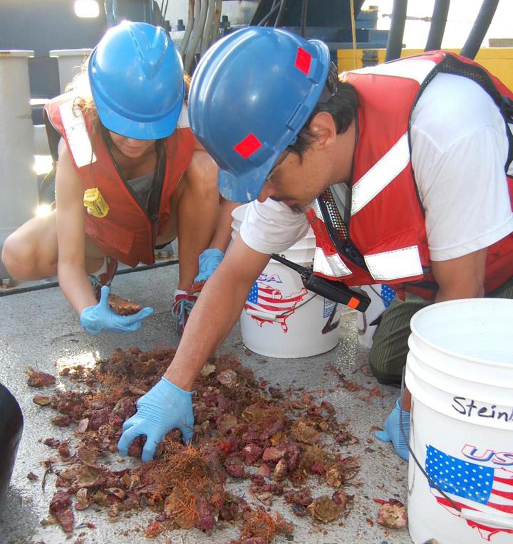 Pesquisadores Nara Oliveira e Rodrigo Moura da UFRJ observam animais de recife de coral coletados durante uma das espedições feitas pelos cientistas  (Foto: UFRJ/Divulgação)