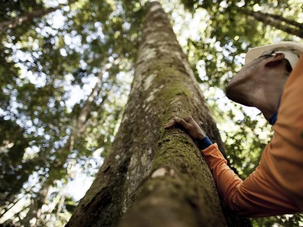 Floresta certificada com o selo FSC (Foto: Divulgação/Amata)