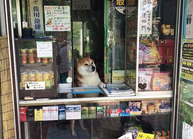 Animal se tornou mascote local ao recepcionar os consumidores em loja (Foto: Reprodução/Twitter/takehirosaho1)