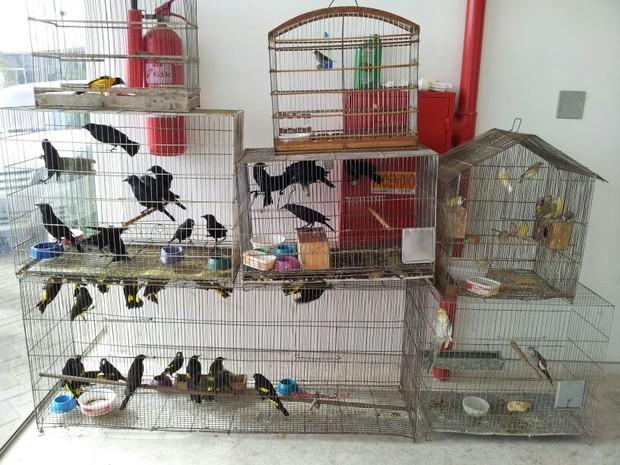 Aves ex[oticas e silvestres foram apreendidas em casa no bairro do Alecrim, em Natal  (Foto: Henrique Dovalle/G1)