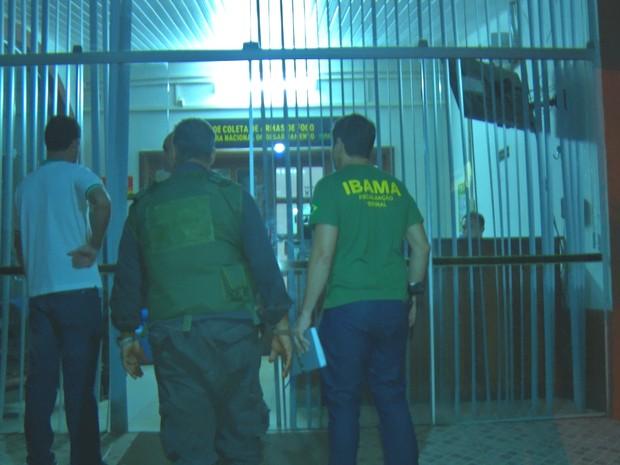 Operação contou com o apoio do Ibama e Polícia Federal (Foto: Reprodução/TV Tapajós)