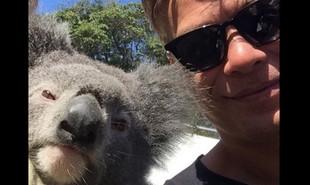 Fabio Assunção fotografa ao lado de um coala durante as gravações de Totalmente demais na Austrália | Reprodução