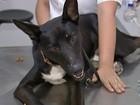 Batizado de Guareí, cão jogado por portão de ONG está com a pata ferida