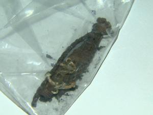 Polícia encontrou pulseira de Itaberli ao lado de corpo carbonizado em Cravinhos (Foto: Reprodução / EPTV)