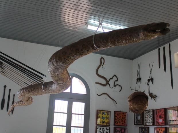 Acervo histórico do Museu de Guajará-Mirim  (Foto: Júnior Freitas/G1)
