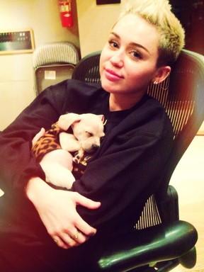 Miley Cyrus posta foto com novo cachorrinho de estimação (Foto: Reprodução / Twitter)