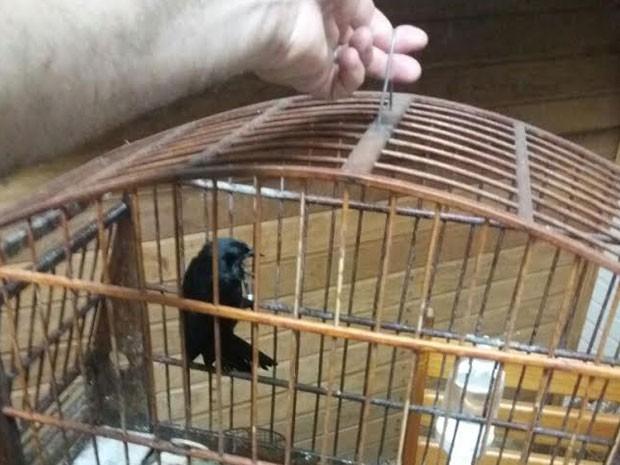 Pássaros foram encaminhados para a perícia (Foto: Cedida/Polícia Militar Ambiental)
