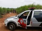 Jovem é morto com dois tiros no rosto em canavial de Mombuca, SP