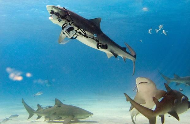 Miguel Lasa registrou momento em que tubarão surgiu e roubou sua câmera avaliada em mais de R$ 40 mil (Foto: Miguel Lasa/Caters News/The Grosby Group)