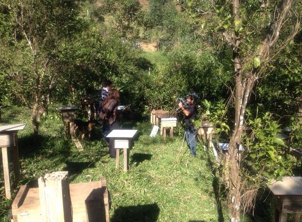 Própolis é usado como remédio para prevenir os frangos orgânicos de doenças (Foto: RBS TV/Divulgação)