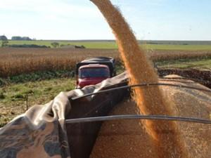 Colheita de milho safrinha em Mato Grosso do Sul  (Foto: Divulgação/Famasul)