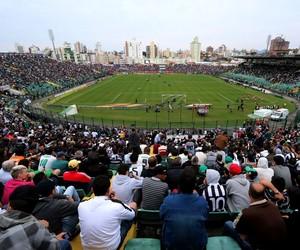 Orlando Scarpelli torcida Figueirense x São Paulo (Foto: Luiz Henrique/Figueirense FC)