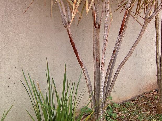 Marcas de sangue ficaram em arbustos na calçada (Foto: Luciano Tolentino/EPTV)