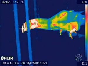Calor no zoológico de sorocaba (Foto: Reprodução/TV TEM)