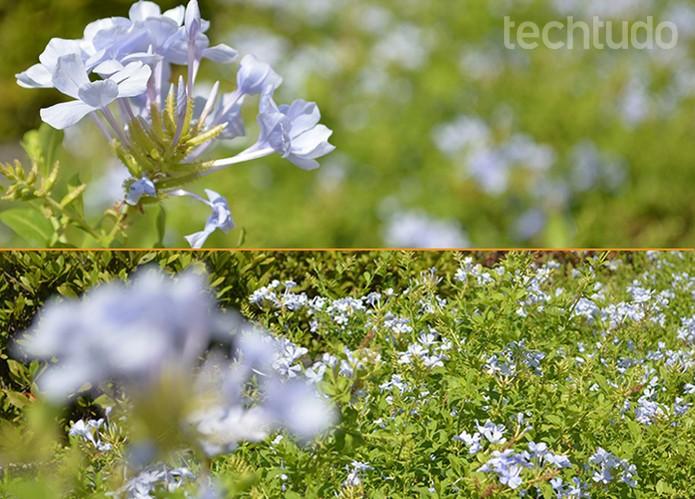 nikon comparação (Foto: Barbara Mannara/TechTudo)