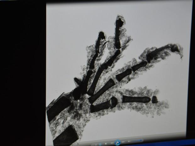 Pata de lagartixa vista em raio-x do laboratório (Foto: Roberta Steganha/ G1)