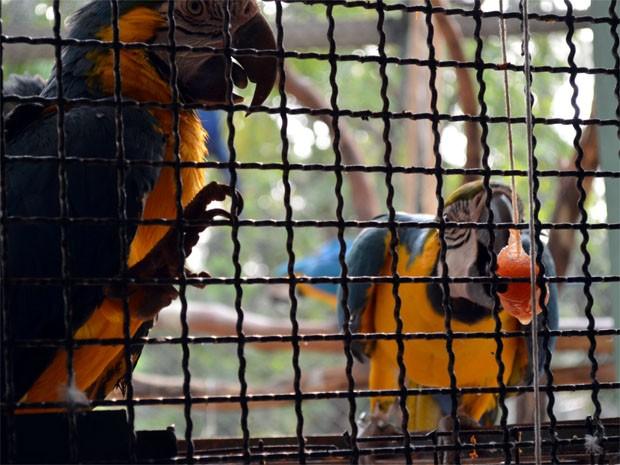 Arara tem tratamento especial com sorvete em zoológico de Ribeirão Preto (Foto: Rodolfo Tiengo/ G1)