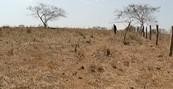 Produção de Magno ganha espaço  (Cavalo Pampa está conquistando cada vez mais espaço (Pesquisa da Epamig ajuda a melhorar a produção do umbu  (Mulheres da Zona Rural conquistam espaço no campo (editar título))))