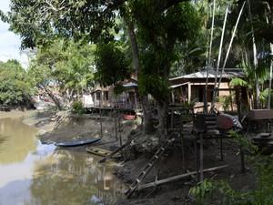 Moradores dividem casas com açaizeiros e várias espécies de animais (Foto: Fabíola Gomes/ G1)
