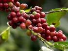 Clima da Serra da Mantiqueira é perfeito para o cultivo de orgânicos