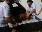 Homens são detidos por maltratar cachorro em Uberlândia