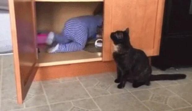 Vídeo de 'gato malandro' trancando bebê em armário faz sucesso na web (Foto: Reprodução/Reddit/SAFE4WORKS)