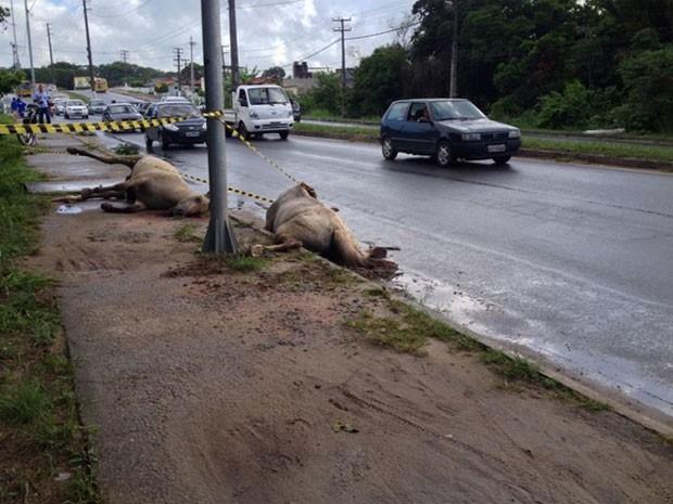 Corpos dos dois cavalos continuavam no local na manhã desta segunda (Foto: Kety Marinho/TV Globo)
