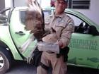 Patrulha Ambiental resgata gavião carcará na Tijuca, Zona Norte do Rio