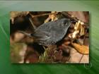 Unidades de Conservação Ambiental na BA têm biodiversidade rica na BA