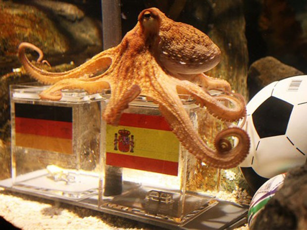 O polvo Paul foi parar na caixa com a bandeira da Espanha (Foto: AFP)
