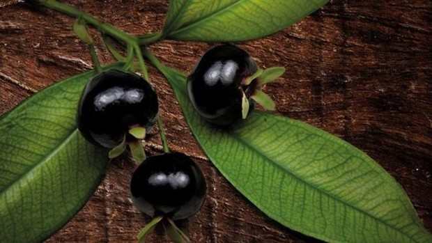 Grumixama é um dos alimentos em extinção no Sudeste (Foto: Alexandre Schneider/Livro 'Misture a Gosto')