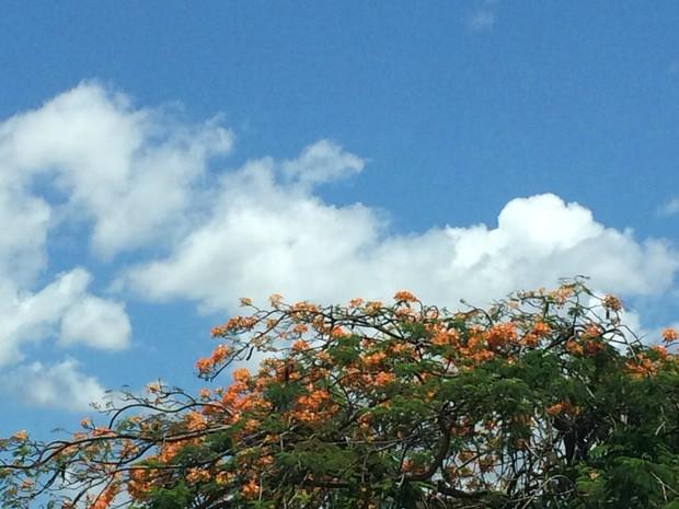 Céu azul e temperatura alta em Campo Grande (Foto: Maria Caroline Palieraqui/G1 MS)