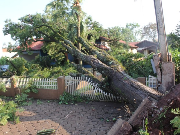 Árvore foi arrancada com força do vento, que chegou a 115 km/h (Foto: Divulgação/Prefeitura de Marechal Cândido Rondon)