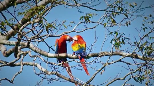 Aves clicadas trocando carícias compõe galeria especial do Dia dos Namorados