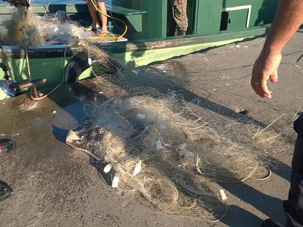 Animais cairam em alto mar quando rede foi puxada por fiscais (Foto: Vínicius Pereira/Arquivo pessoal)