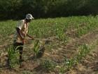 Governo do Ceará reconhece estiagem em 168 cidades do estado