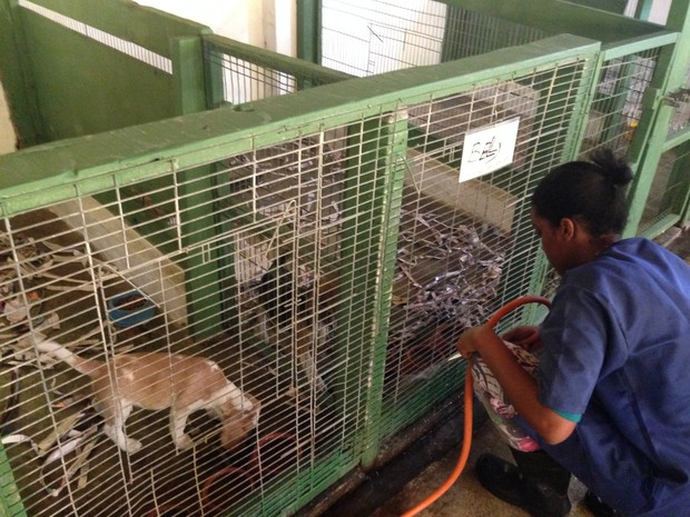 Caso Beagles - Fazenda Angolana 5 - São Roque (SP) (Foto: Natália de Oliveira/ G1)